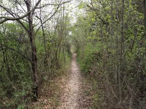 Colline di Pastrengo - Sentiero nel bosco