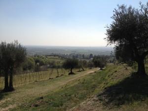 Rientro verso Gargagnago - Scorcio Valpolicella