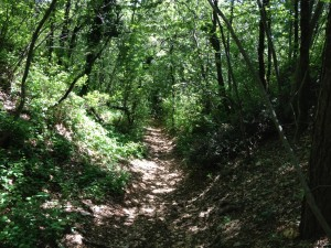 Monte Belpo - Discesa Monte Sisam