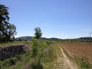 Monte Belpo - Verso Affi 1