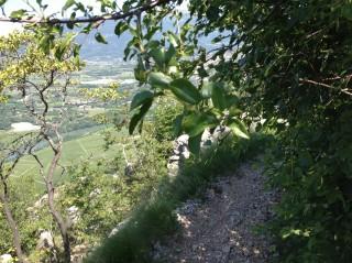 Valpolicella Valdadige - Monte discesa dal Forte - Passaggio