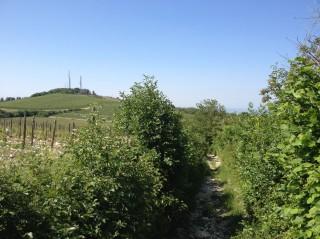 Valpolicella Valdadige - Monte Solane